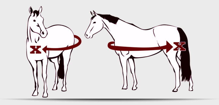 Sizing your Horse
