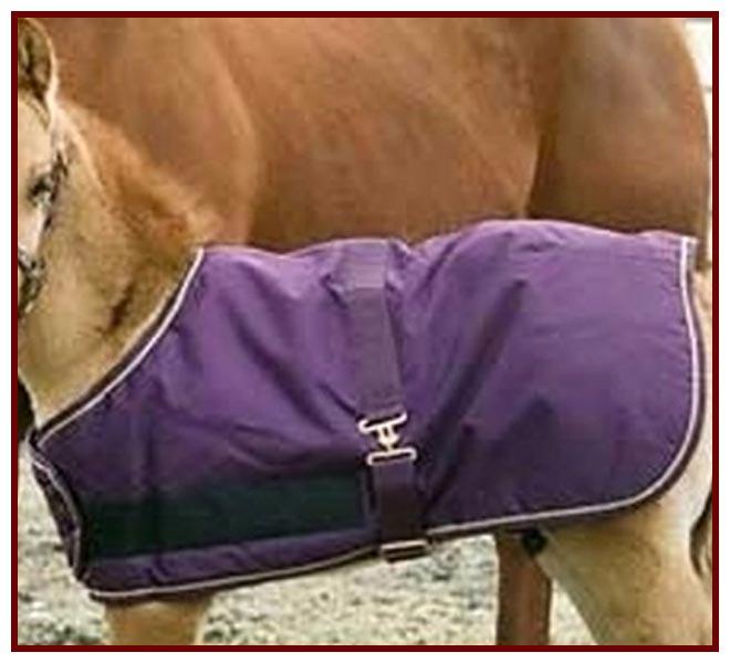 Kensington Foal Turnout Blanket