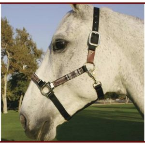Kensington Breakaway Halter Set
